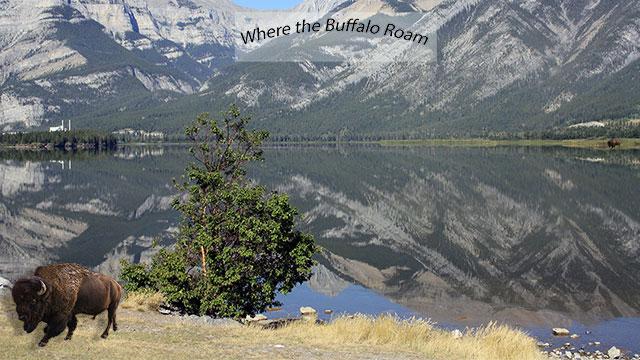 Mountain and lake scenic image with Buffalo